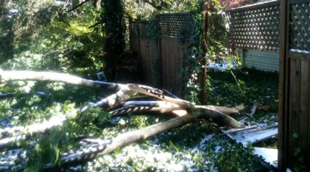 storm damage tree crushes fence