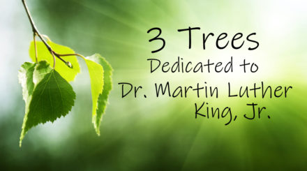 3 trees dedicated to Martin Luther King Jr