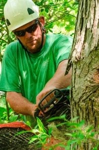 Tree Service Performed Safely by Experienced Professionals