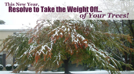 Resolve to take the weight off of your trees