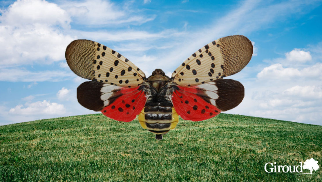 Spotted Lanternfly Earth day